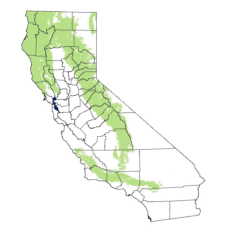 California-Black-Bear-area.jpg